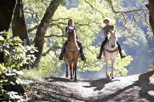 Charlottesville VA Horseback Riding